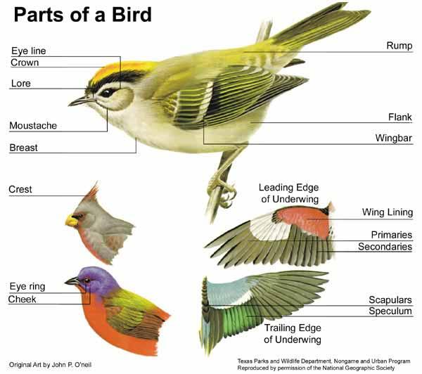 Anatomy Of Animals English Subject Area